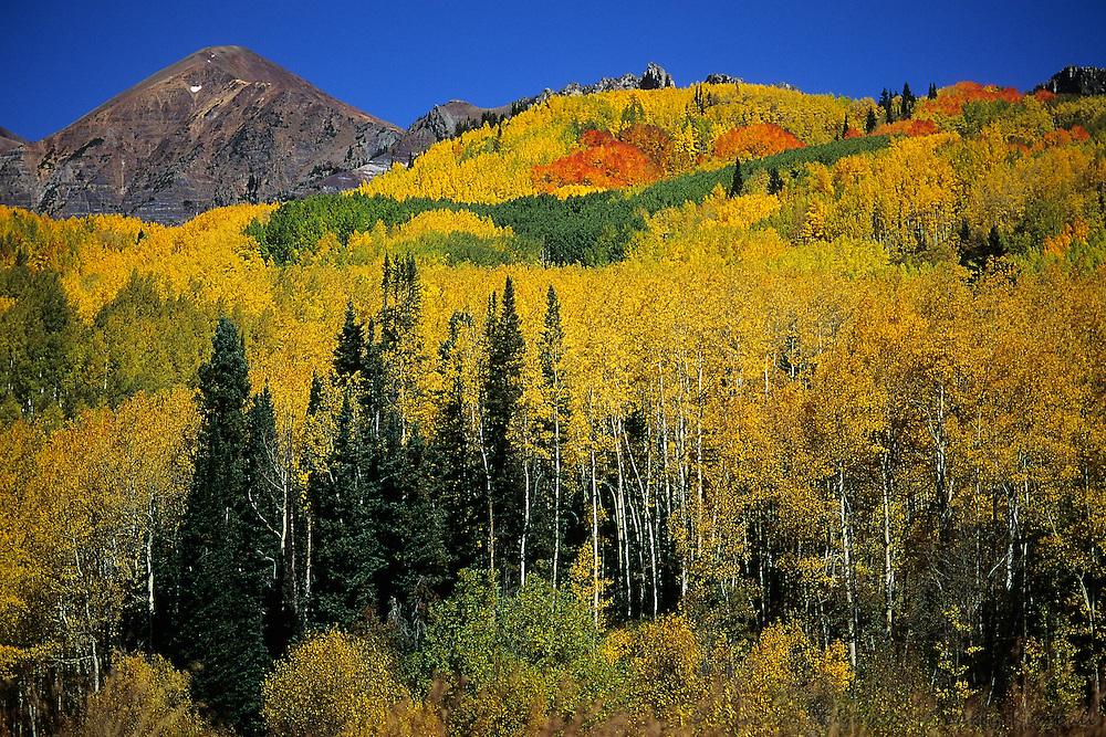 Autumn aspens below Ruby Mountains, Ragged Wilderness, Kebler Pass, Colorado