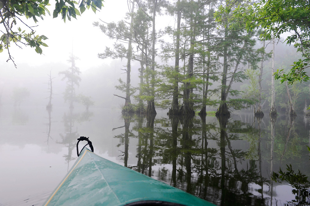 A kayak drifts through Cypress trees shrouded in early morning fog at Chicot State Park.