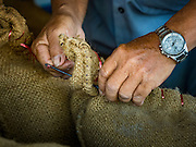 "08 DECEMBER 2015 -  NONG SAENG, NAKHON NAYOK, THAILAND: A worker at a rice drying business sews shut bags of dry but unmilled rice during the rice harvest in Nakhon Nayok province, about two hours north of Bangkok. Thai agricultural officials expect rice prices to go up by as much as 15% as global production of rice is cut by the Pacific Ocean El Niño weather pattern. Thailand's rice production is expected to drop in the coming year. Persistent drought has reduced the main crop, currently being harvested, and the military government has ordered farmers not to plant a second crop of ""dry season"" rice to conserve Thailand's dwindling supply of water. Thailand's water reservoirs are at their lowest seasonal levels in recent memory and little rain is expected during the dry season, which lasts until June.    PHOTO BY JACK KURTZ"