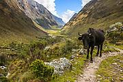 Santa Cruz River Valley, Andes, Peru