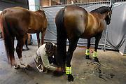 Nederland, Nijmegen, 18-7-2007<br /> Op het politiebureau worden de politiepaarden voorzien van enkelbeschermers voor zij op straat gaan surveilleren tijdens de vierdaagse , vierdaagsefeesten, om het publiek te observeren en indien nodig te sturen. Veiligheid, beheersen mensenmassa, evenement, festival, menigte, criminaliteit. Bewaking, stad, straat, plein. Crowd control<br /> Foto: Flip Franssen/Hollandse Hoogte