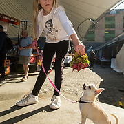 01/09/2017<br /> <br /> Pictured enjoying the Limerick Urban Food Fest, the opening event of the Pigtown Food &amp; Culture Series at the Milk Market, Limerick, is Robyn Butler, from Watergate, Limerick, with 'Fluffy' the chihuahua.<br /> Picture: Diarmuid Greene/Alan Place Photography