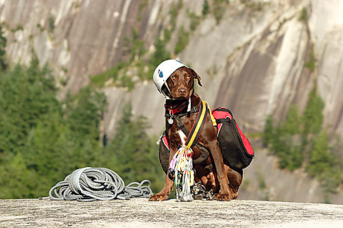 Dog posing with climbing gear Squamish, BC, Canada<br />