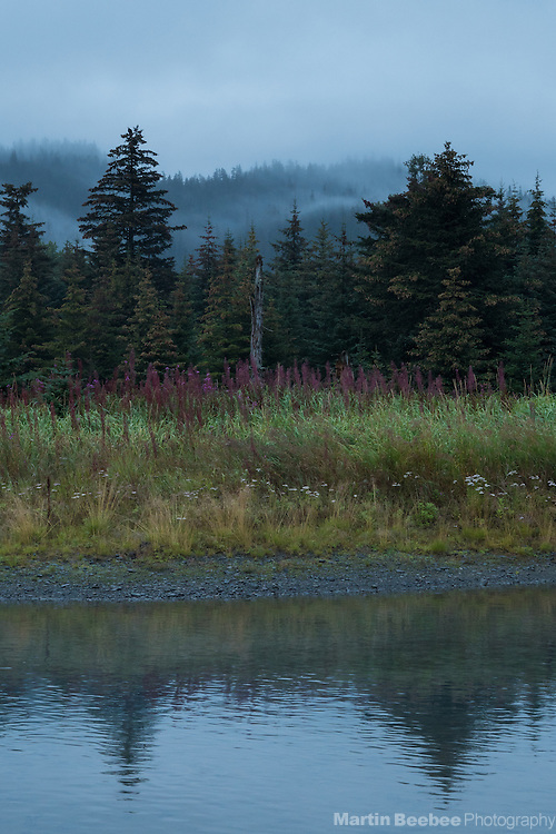 Mist and trees outside Seward, Alaska