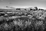 A coastal marsh in northern Massachusetts along the Plum Island Turnpike, USA
