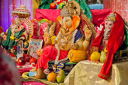 Ganesha idols line the front of the room with offerings of fruits and flowers placed at their feet.  brought from The India Association of the Virgin Islands celebrates the end of Ganesha Chaturthi the ten day Hindu festival to honor the elephant-headed god Ganesha.  During the festival adherents chant and sing songs of worship, present offerings of fruit and flowers,  and whisper prayers and wishes to the god.  India Association of the Virgin Islands Culture Center.  Frenchman's Bay.  St. Thomas.  15 September 2016.  © Aisha-Zakiya Boyd