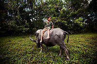 A young boy rides a water buffalo near the temples of Angkor Wat in Cambodia.