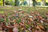 Autumn leaves in Cabinteely Park Dublin Ireland