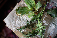 """Obyolulu and itwetu, two types of native herbs traditionally taken together to """"correct missed periods"""", sit in the room where herbalist Cecilia Osakwe, 50, sees her clients, in the Ajegunle neighborhood of Lagos, Nigeria, August 27, 2013. The concoction is sold as a tincture of the crushed herbs mixed with local alcohol and is to be taken twice a day for four days.  Osakwe says that she has stopped selling this particular combination, believing that it will bring her fertility practice bad luck."""