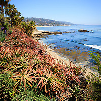 Photo of Laguna Beach coastline, Heisler Park flowers, and Pacific Ocean. Laguna Beach is a seaside beach city in Orange County in Southern California.