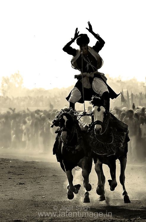 Nihangs gallop past on frothing horses, raising clouds of dust, as they celebrate Hola Mohalla.