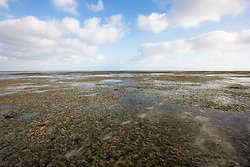 Seagrass at Town Beach, Broome on a low tide.