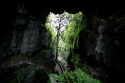 NEW ZEALAND WAITOMO 16DEC07 - Mangapohue Natural Bridge, formed by the remains of a collapsed cave roof near Waitomo...jre/Photo by Jiri Rezac..© Jiri Rezac 2007..Contact: +44 (0) 7050 110 417.Mobile:  +44 (0) 7801 337 683.Office:  +44 (0) 20 8968 9635..Email:   jiri@jirirezac.com.Web:    www.jirirezac.com..© All images Jiri Rezac 2007 - All rights reserved.