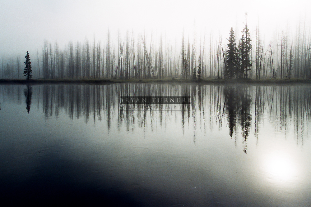 Dead trees from the 1988 fires stand among a few survivors in the fog along the Lewis River in Yellowstone National Park.