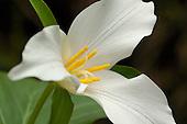 Wildflowers & Plants Stock Photography