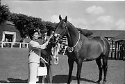 """08/08/1962<br /> 08/08/1962<br /> 08 August 1962<br /> Dublin Horse Show at the RDS, Ballsbridge, Wednesday. <br /> Picture shows """"Hypur"""" a 3 year old gelding owned by Mrs E.M.R. O'Driscoll, Belvedere Stud, Donaghadee, Co. Down, winner of the Anthony Maude Cup, for the best 3 year old gelding of the Dublin Horse Show with Mr and Mrs O'Driscoll."""