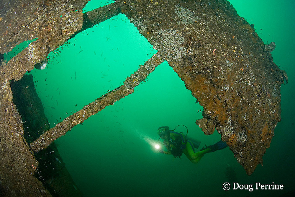 divers on the wreck of the Seian Maru, a Japanese cargo vessel sunk by Allied air strike on Nov. 19, 1944; the wreck lies on its port side at a depth of 25 m near Alava Pier in Olongapo Harbor, Subic Bay, Philippines; MR 378, 379