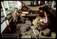 Men in hold of boat unload blocks of crude rubber collected from rubber tappers along Jurua River Brazil