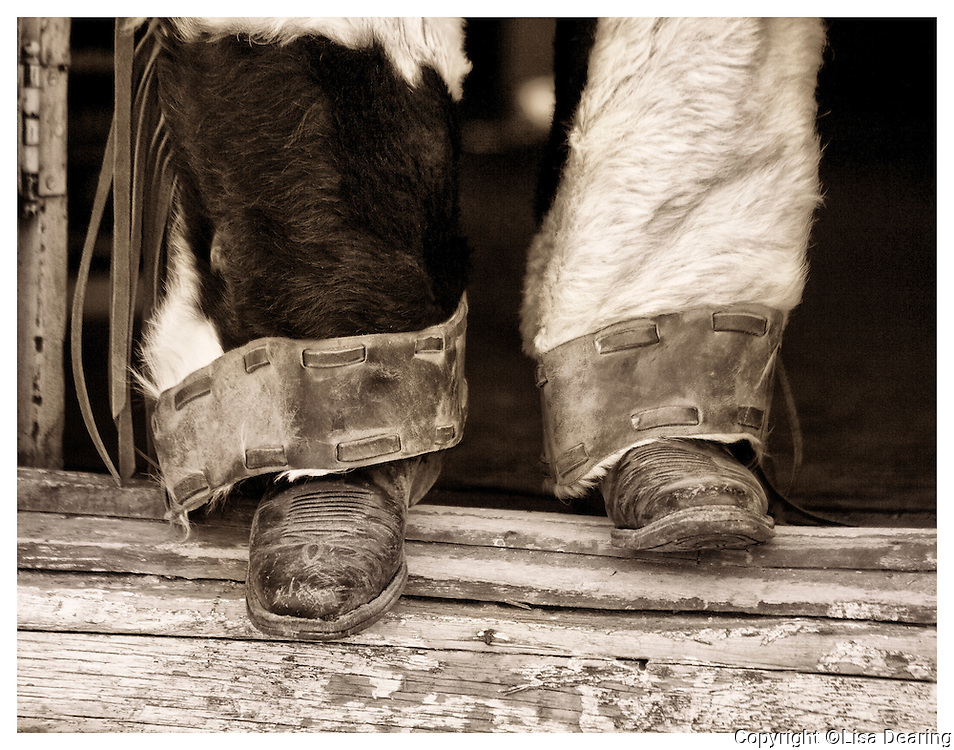 Detail of Cowboys Boots and Furry Chaps, Wyoming