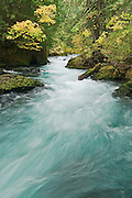 The Wild & Scenic Upper McKenzie River, Willamette National Forest, Cascade Mountains, Oregon.