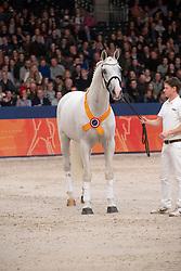 Berlin<br /> KWPN Stallionshow - 's Hertogenbosch 2018<br /> © Hippo Foto - Dirk Caremans<br /> 01/02/2018