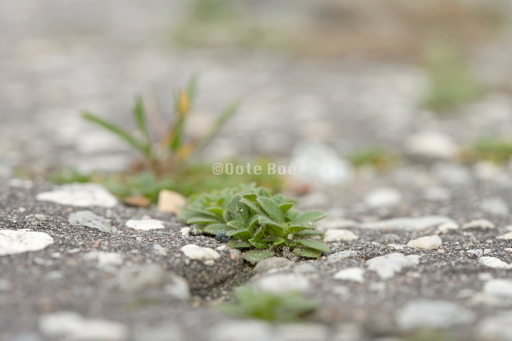 extreme close up of grass and plants growing between the cracks in asphalt pavement
