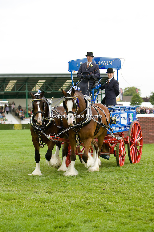 Heavy Horse Pairs Turnouts<br />