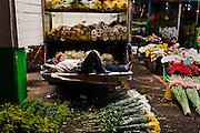 A flower seller relaxes in Jamaica Market, Mexico City.