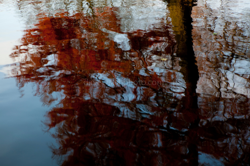 Red leave reflection
