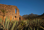 Old Spanish Mission and Agave, San Sebastian, Mexico