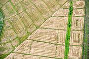 SRI LANKA. Paddy field pattern_
