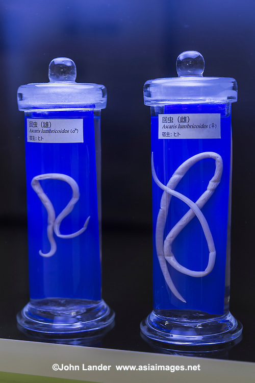 The only place in the world entirely devoted to parasites, the Meguro Parasitological Museum has become a popular offbeat attraction. The museum has over 45,000 specimens in its collection.<br />