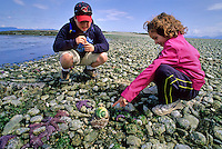 Kids, 10, 7, look at moon snail, Hornby Island, BC