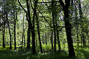Woods are thick on the way to Thixendale, Yorkshire, England, United Kingdom.