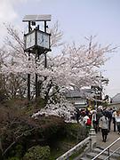 Japan, Honshu, Kyoto, Kiyomizu-Dera temple, Cherry Blossoms