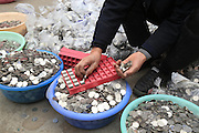 ZHENGZHOU, CHINA - JANUARY 11: (CHINA OUT) <br /> <br /> Man Wants To Exchange Over 300,000 One-yuan Coins Into Banknotes<br /> <br /> Picture shows the one-yuan coins waited to be exchanged into banknotes at the storehouse on January 11, 2016 in Zhengzhou, Henan Province of China. Mr. Zhang collected over 300,000 one-yuan coins from the coin-operated washing machines he managed, and he wanted to exchange the coins into paper money to pay salary for the workers. However the nearby banks all didn\'t agree to exchange them into banknotes immediately for the season that the bank could only exchange 2,000 to 3,000 coins per day and they had to confirm the coins were real<br /> ©Exclusivepix Media