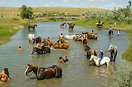 Custers Last Stand Reenactment. Crow Indian Reservation. Young warriors cool off in Little Bighorn after defeating Custer and 7th Cavalry
