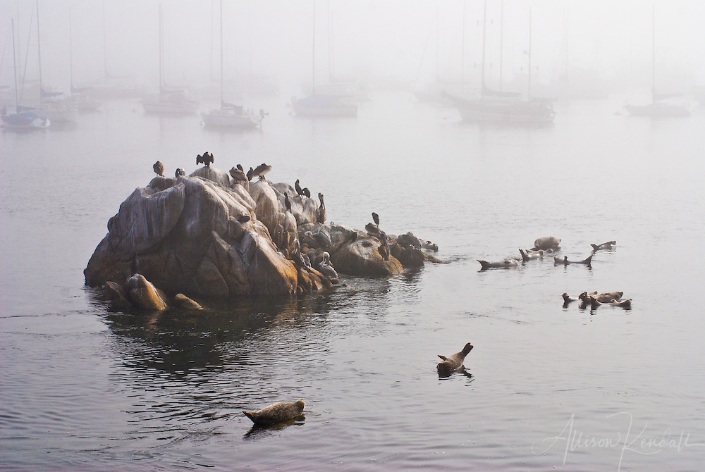 Morning fog hangs thick over Monterey harbor, as seals and seabirds gather among the quiet boats