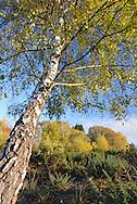 Autumn colours on Hampshire heathland