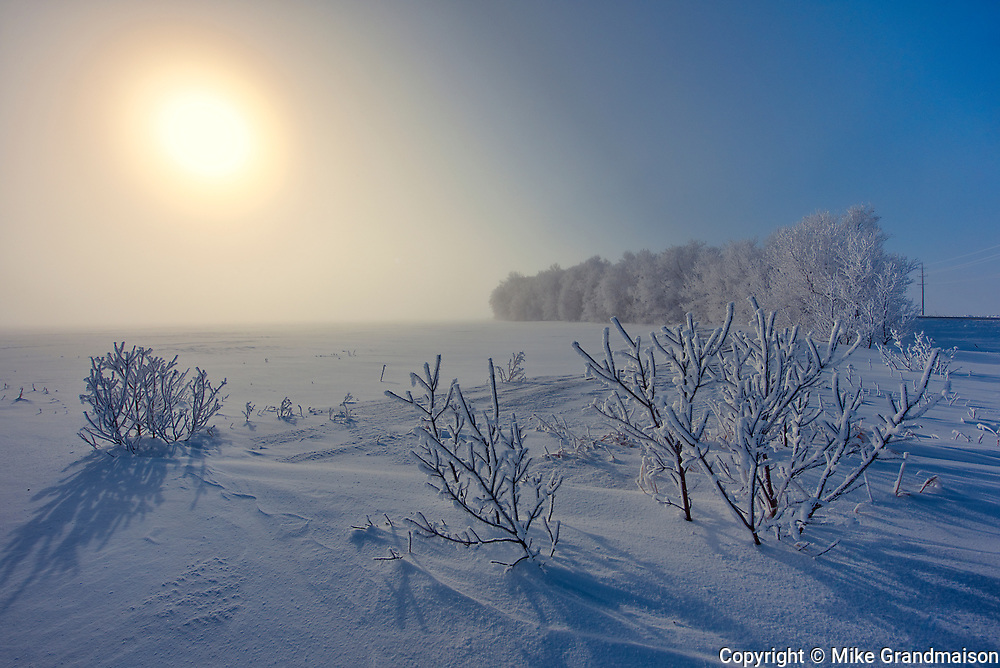 Hoarfrost covered shelterebelt trees and shrubs at sunrise<br />