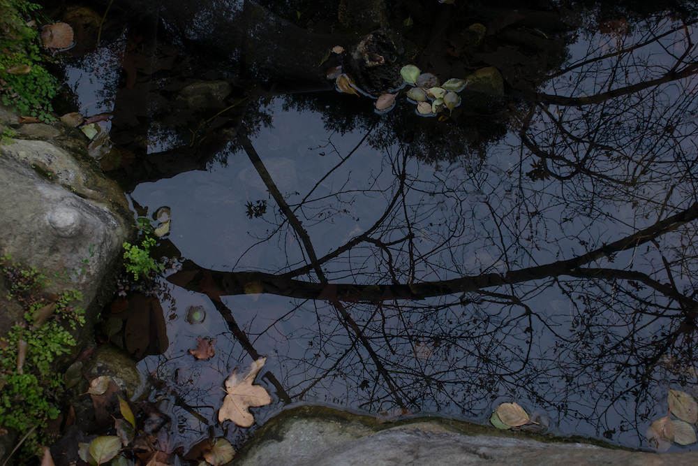 Reflections of California winter wilderness in the creek, Santa Monica Mountains, Solstice Canyon, CA 1.15.16