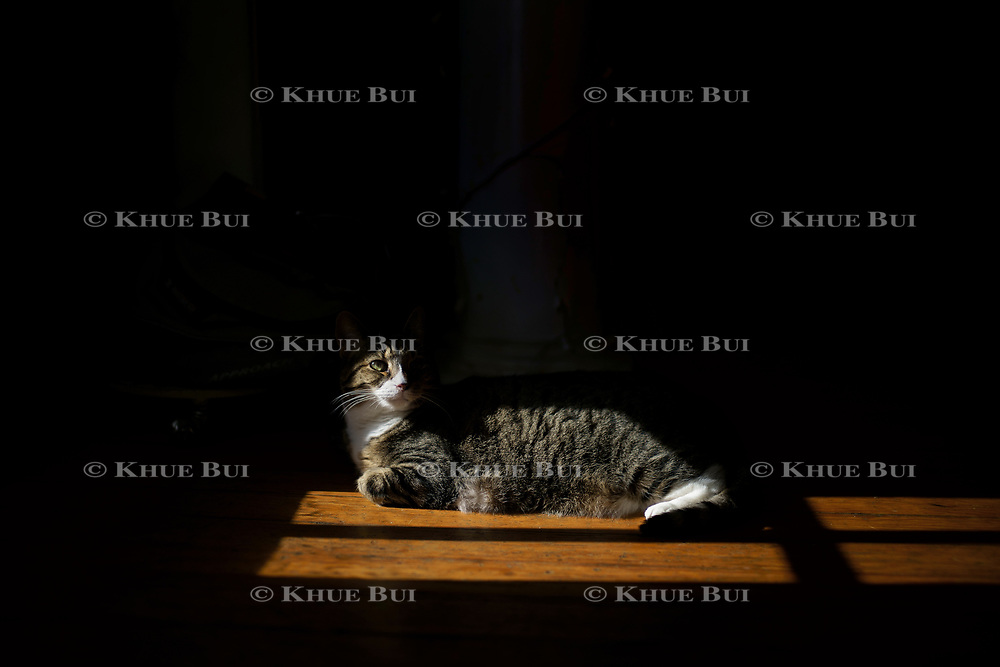 Mochi bathes in sunlight January 30, 2018, in Richmond, VA.<br /> <br /> Photo by Khue Bui