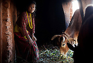 Lalita, 14, poses for a photo inside of the household chaupadi shelter, a squat crawlspace under the home shared with the family's animals, where the women of the house sleep during their periods, in Rima village, Achham, Nepal. Lalita makes her bed in the dark space behind where the cows are fed, lighting a fire to stay warm.