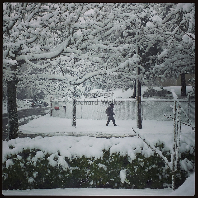 2017 FEBRUARY 06 - A man walks in the snow in West Seattle, WA, USA. Taken/edited with Instagram App for iPhone. By Richard Walker