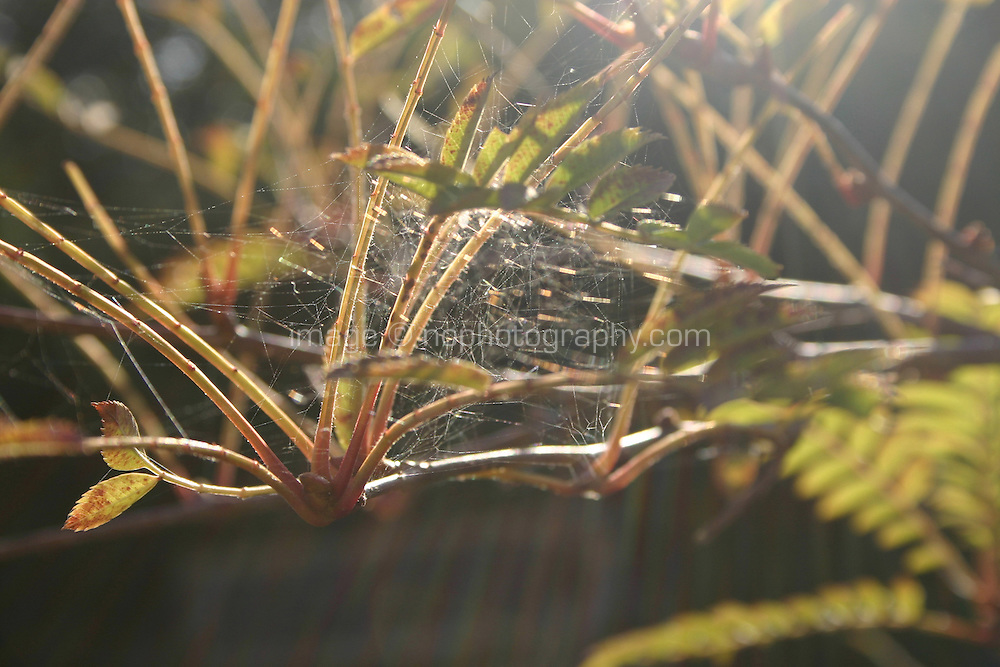 Sunlight on spiders web<br />