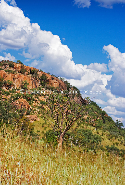 A lone boab grows beside a rocky outcrop at Napier Downs Station on the Gibb River Road.