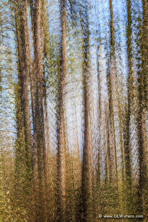 Monet style impression of a maritime forest on the Outer Banks. I combine multiple exposures as I moved the camera small amounts to achieve this affect.