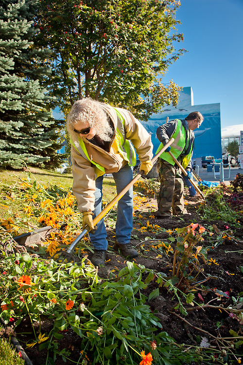 MOA Horticulturist, Sandra Polvin, and her crew pull flowers at the end of summer at Anchorage's Town Square