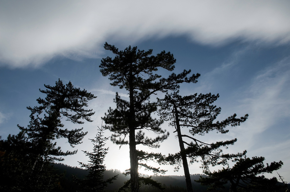 Greece, Pindos Mountains, Pindos NP, Valia Calda, Black Pine trees on top of the hill