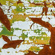 Bird flying in tree branch rust found on an old trolly car in Astoria, Oregon.